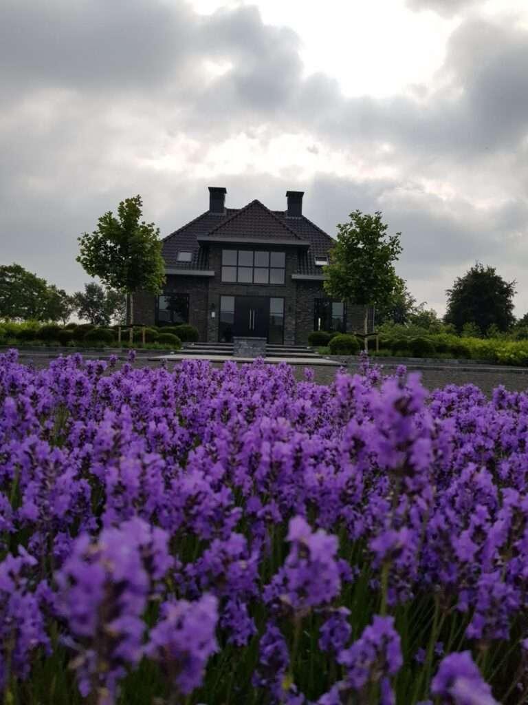 landelijke tuin in bloei