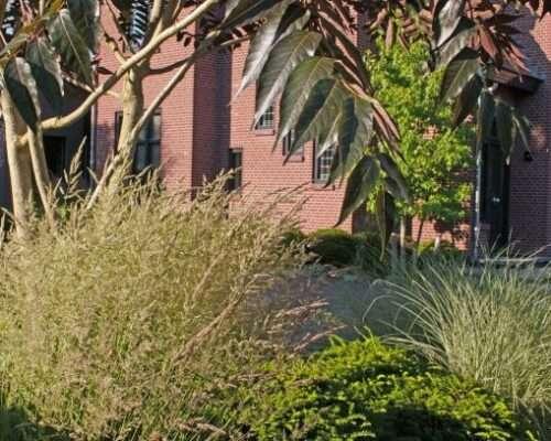 bladstructuren tuinontwerp Cuijk