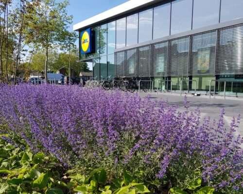Beplanting in openbare ruimte