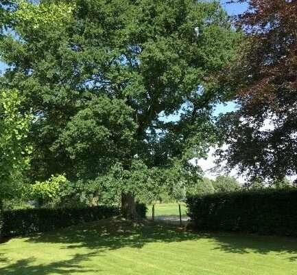 Oude bomen inpassen in het tuinontwerp