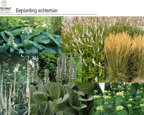 Voorbeelden-beplanting