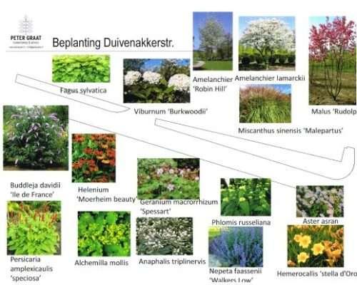 planten-voorbeelden-tuinontwerp-Gennep